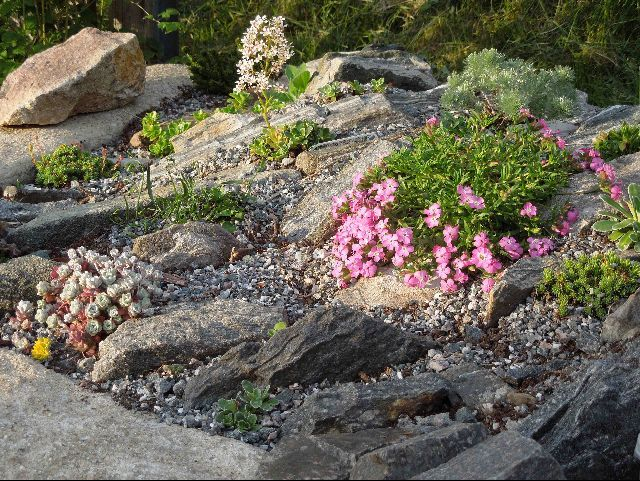 Alpine Garden Design Images Design Inspiration