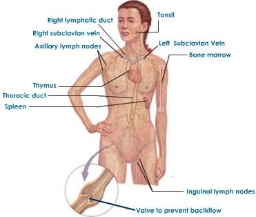 Study Links Gene to Parkes-Weber syndrome, Lymphatic Abnormalities: http://bionews-tx.com/news/2013/07/01/parkes-weber-syndrome-lymphatic-abnormalities/