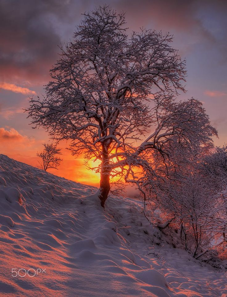 Pink light by Rune Askeland on 500px