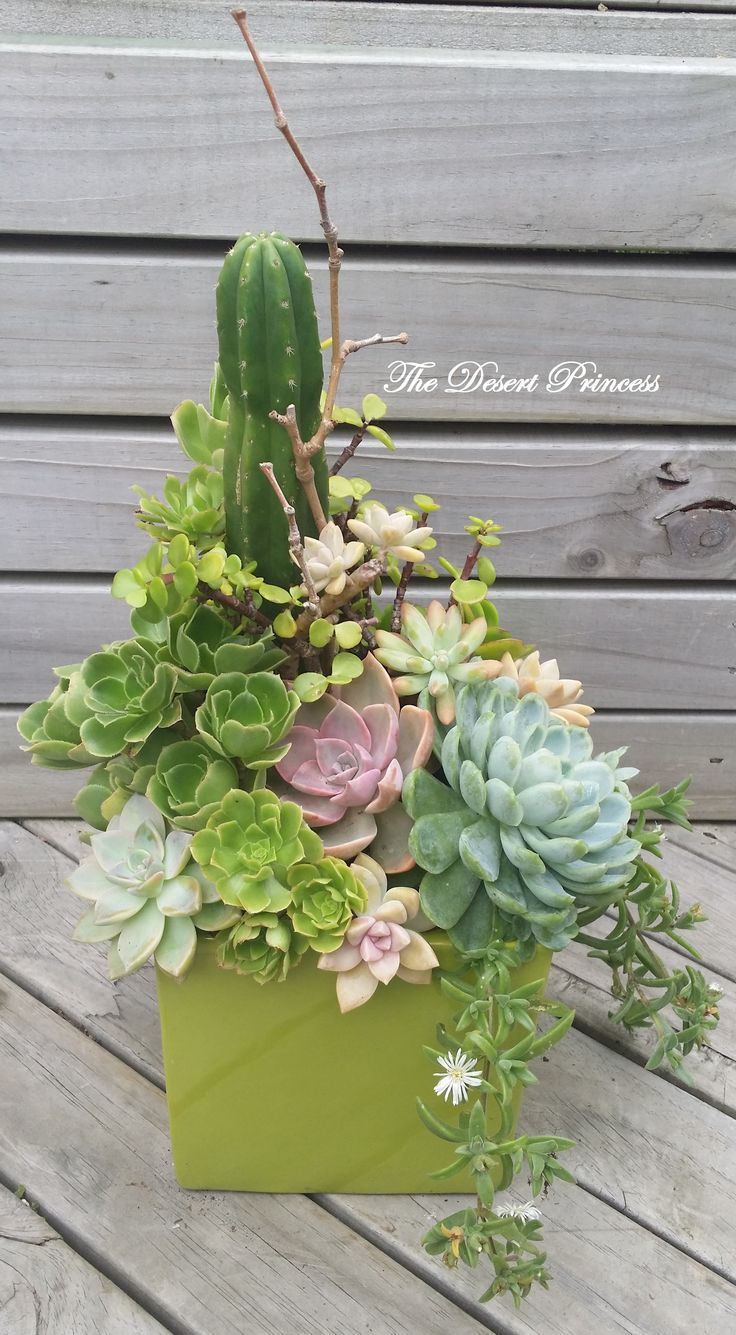 Succulent Floral Arrangement by The Desert Princess www.facebook.com/thedesertprincess1006