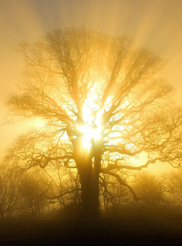 Oak sunrise, by graham fellows..
