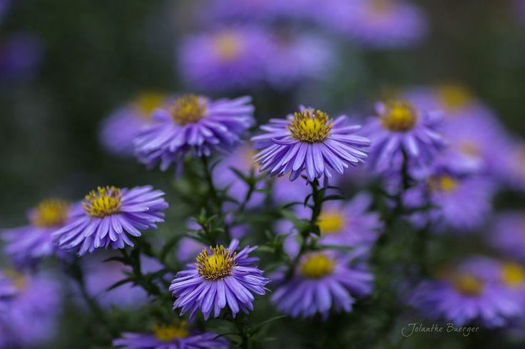 faire livrer des bouquets de fleurs 049 #fleurs #bouquet