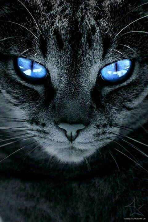 ❤🐾 PurrLux.com 🐾❤  For the cat connoisseur…  – Cute animals