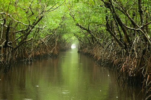 The Everglades - Top 10 things to do in the Florida Keys