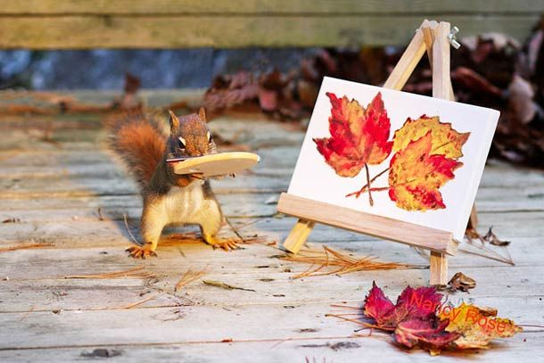 "Canadian photographer Nancy Rose had noticed that the squirrels in her backyard were particularly tame, so she decided to create a series called ""Mr. Peanuts"" b"