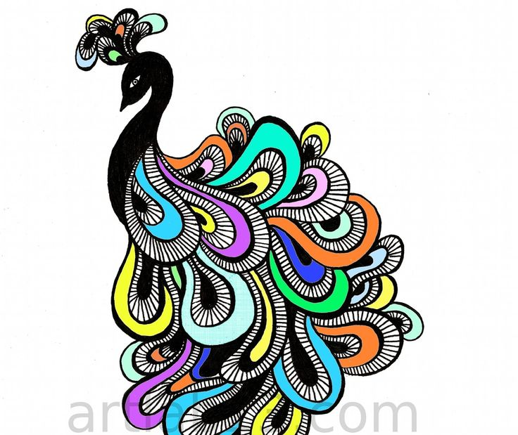 peacock sketch color google search