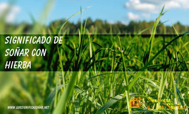 Significado de soñar con hierba - https://xn--quesignificasoar-kub.net/significado-de-sonar-con-hierba/ #sueños #soñar #significadoDeLosSueños