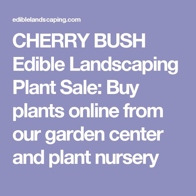 CHERRY BUSH Edible Landscaping Plant Sale: Buy plants online from our garden center and plant nursery