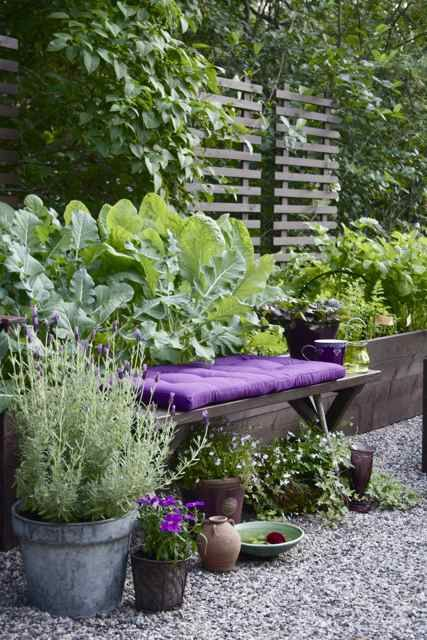 Trellis made from recycled palettes, raised veggies, potted herbs