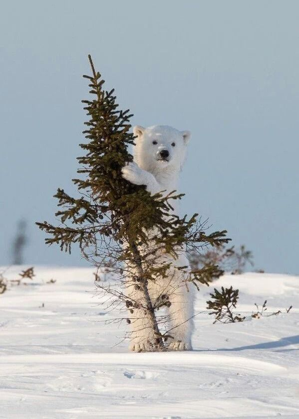I'm hiding behind this tree so they won' see me, they will just think I'M PART OF THE SNOW !!!