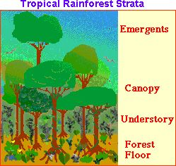 Great Rainforest Info from Enchanted Learning