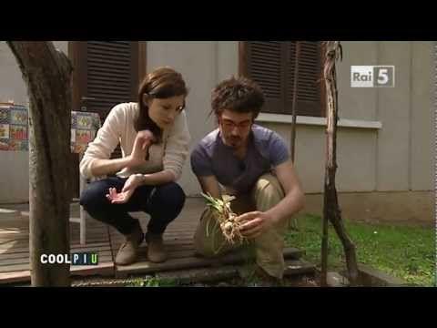 zafferanami.it - coltivazione di zafferano a Milano - CoolTour