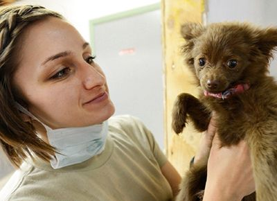 7 Tips for Fear Free Veterinary Visits