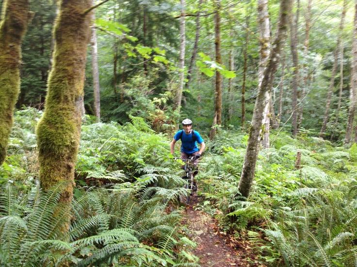 Mountain Biking in my backyard. Squamish, BC, Canada
