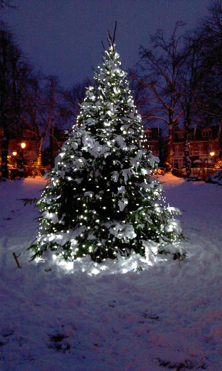 154 best christmas lights images on pinterest merry christmas christmas tree lights low voltage netlights from lights4fun aloadofball Images