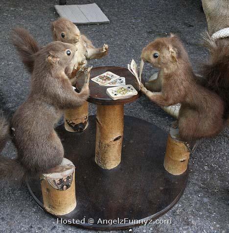 Funny animals gambling pictures harrahs casino maintenance
