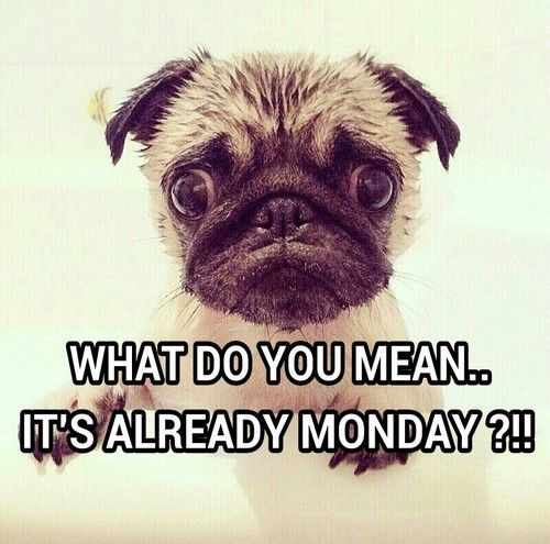 What do you mean its already monday monday monday quotes monday sucks happy monday i hate mondays