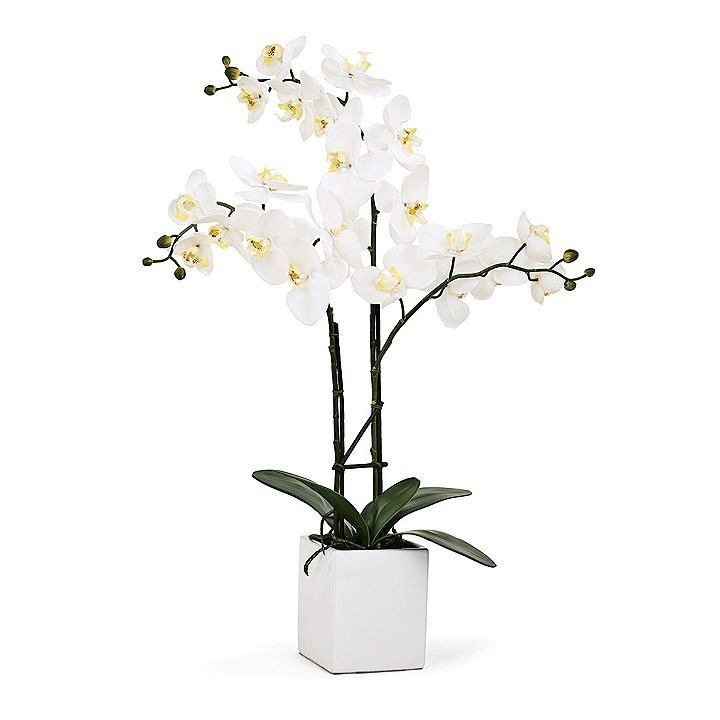 25 best ideas about potted orchid centerpiece on pinterest orchid wedding centerpieces white - How to care for potted orchids ...