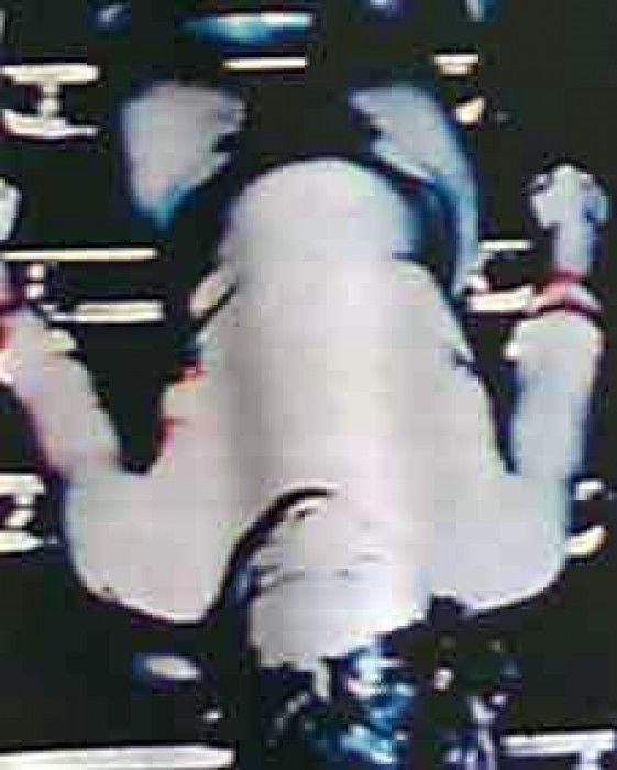 Ted Bundy crime scene photos   Investigating Crimes