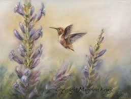 Afbeeldingsresultaat voor kolibrie tekening