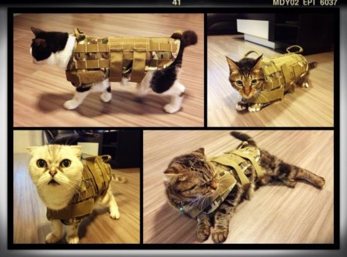 A Two Tactical Vest Of Dogs Army Dogs Small And Medium