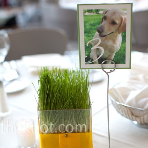 Okay... not of a dog, but I like the idea of having the table numbers being pictures of us!