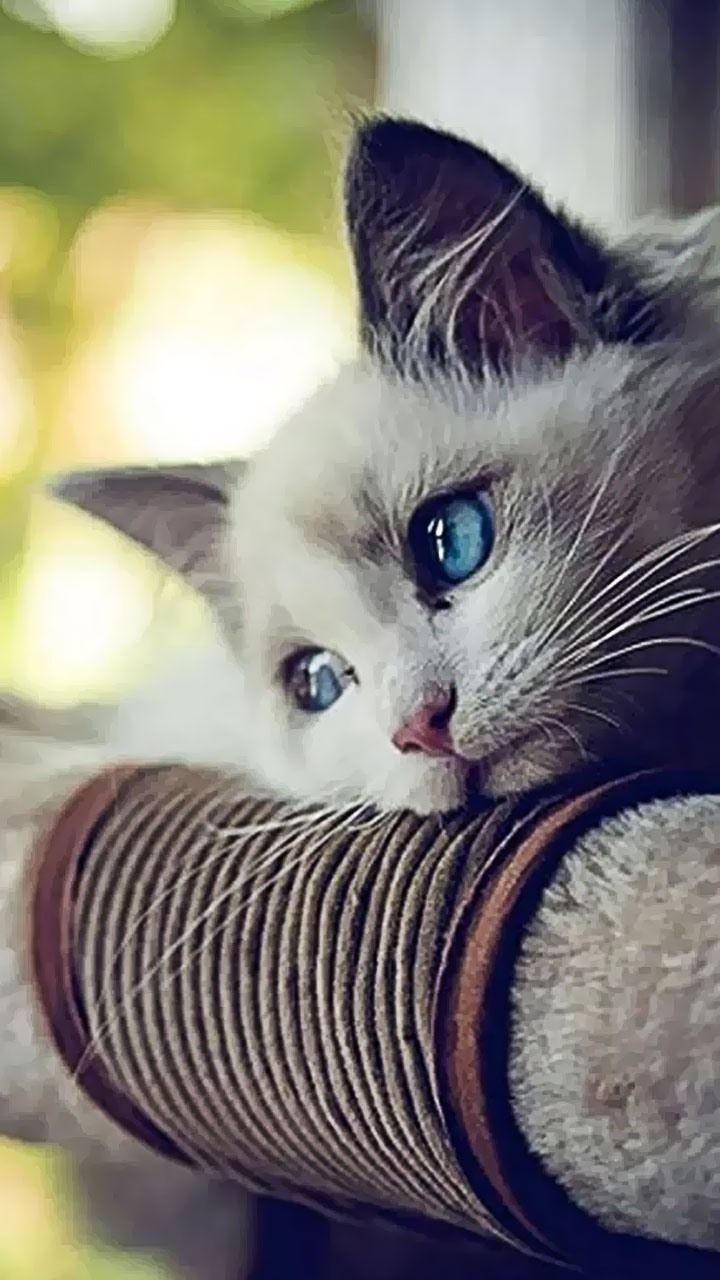 Cute Animals For Cellphone Wallpapers