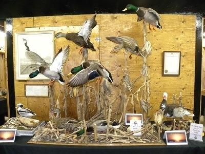 Corn mount idea  Mallards  Bird taxidermy Duck mount