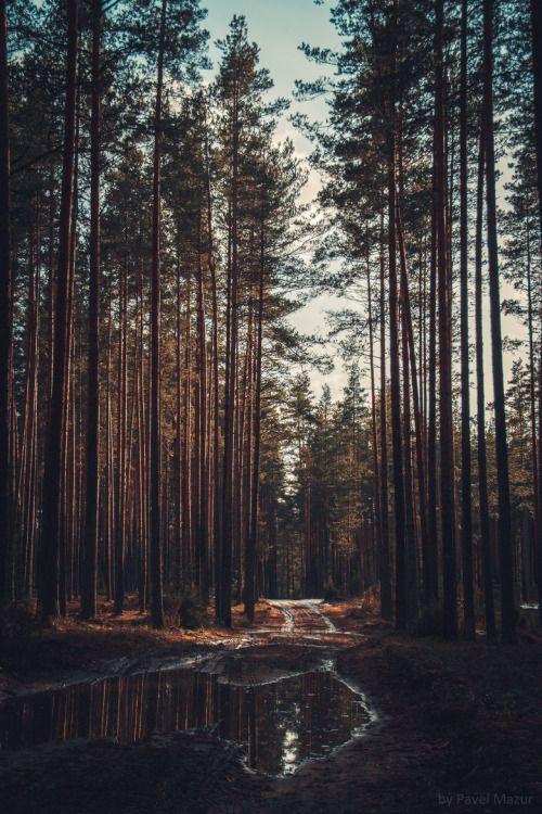 umq: Forest {Pave Mazur}