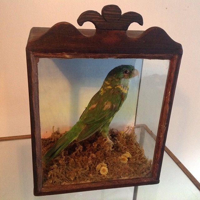 Amazon parrot in a cool case.