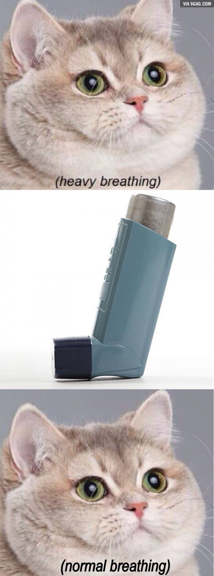 Heavy breathing cat. Asthmatics can relate.