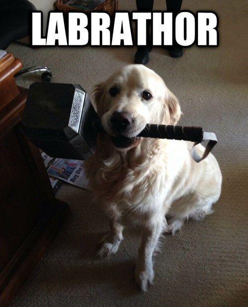 // Labrathor