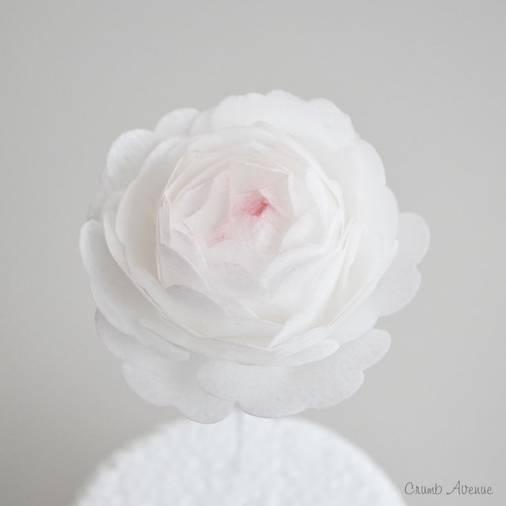 Wafer Paper Peonies Tutorial by Crumb Avenue