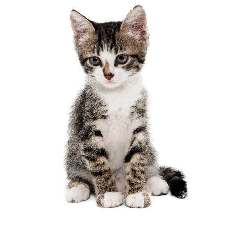Mejores 272 imágenes de Gatos en Pinterest | Gatitos, Gatos y Gatos ...