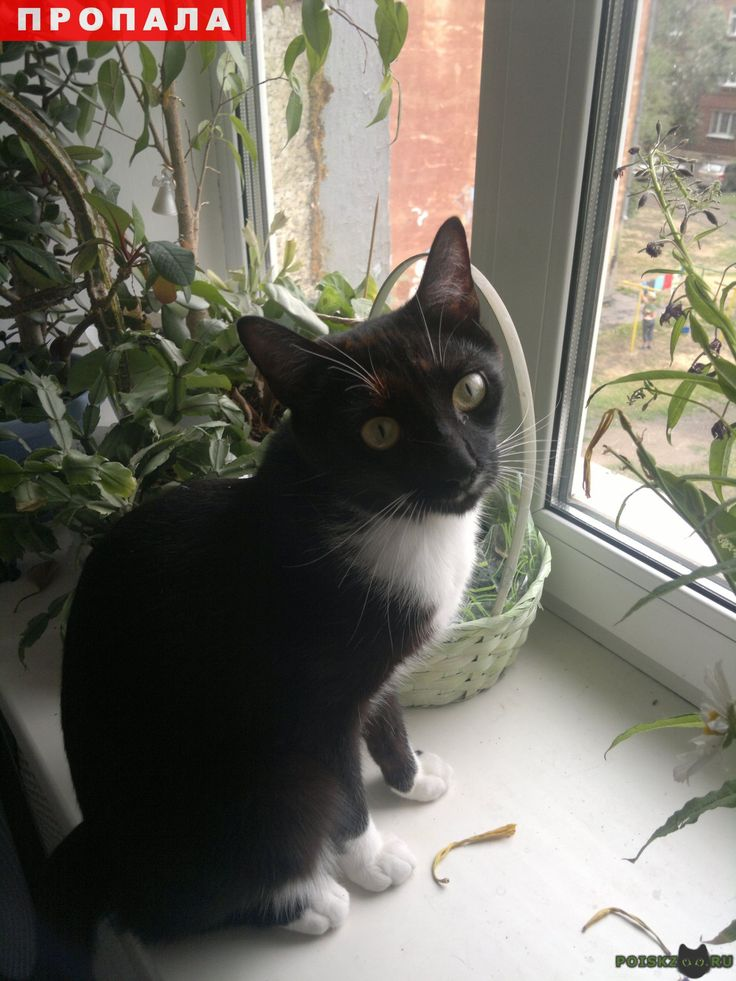 Пропал кот г.Иркутск http://poiskzoo.ru/board/read25394.html  POISKZOO.RU/25394 Потерялся кот! в районе площади Декабристов. Окрас черно-белый, усы белые, глаза зеленые, отзывается на кличку Кузя. Если Вы видели или нашли кота, пожалуйста, позвоните! Вознаграждение гарантируем! ...; ... Светлана  РЕПОСТ! @POISKZOO2 #POISKZOO.RU #Пропала #кошка #Пропала_кошка #ПропалаКошка #Иркутск