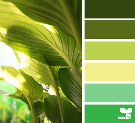 All of these shades and tints are green, they are not a monochromatic palette for interiors.