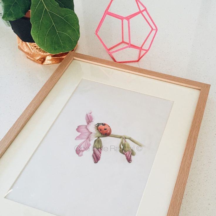 OneLittleRascal - ✖ CURIOUS LADYBUG✖ Coloured pencil drawing.  Limited edition prints. Individually signed and numbered.  Available for purchase in a range of sizes as a Giclée Fine Art print.