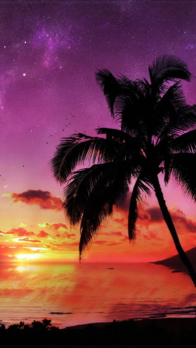 Sunset w/ palm trees | iPhone 5s Wallpapers :) | Pinterest ...