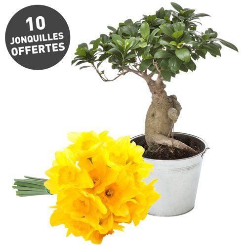 1000 id es propos de arbres en pots sur pinterest for S occuper d un citronnier en pot