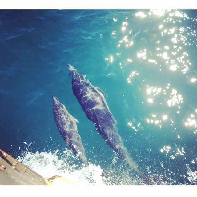 Whale-Watching Cruise - Marina Del Rey Sportfishing