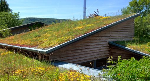 Pitched Green Roof - Zinco