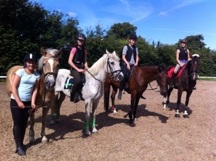 hest ridning ridesport