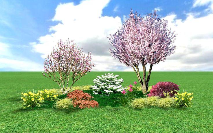 Okrasné třešně jako keře nebo malé stromy | My a zahrada