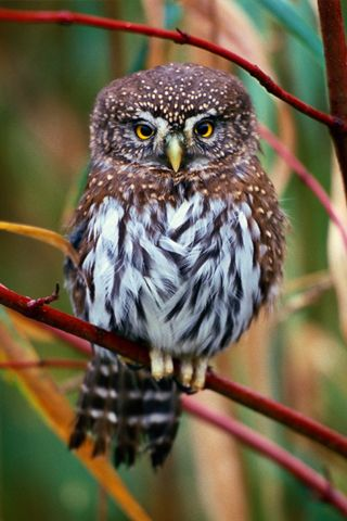 Beautiful baby owl. Just looking at him makes you think of fall and old barnyards.