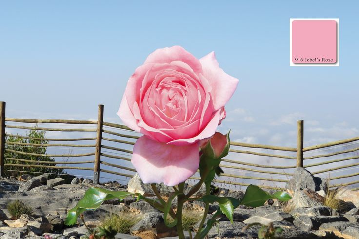 "apprico COLOURS – Element FEUER – ""Jebel´s Rose""  #fengshui #elementfeuer"