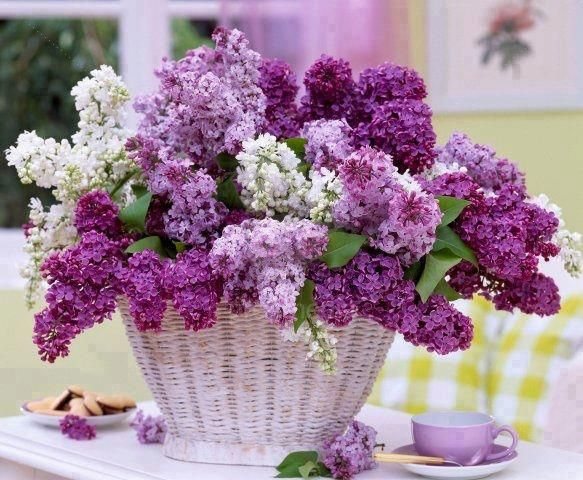 Lilacs==always so beautiful at Grandpa and Grandma's!