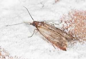 Natural Methods To Get Rid Of Moths