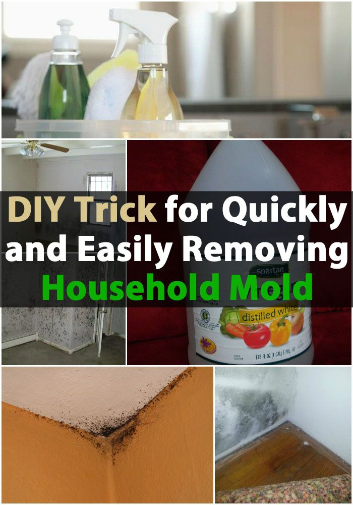 DIY Trick for Quickly and Easily Removing Household Mold   #DIYcleaning  https://www.kleengaroo.com/