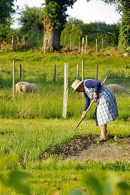 looks like my grandmother working her garden.  I can still remember those fresh tomatoes and green beans!