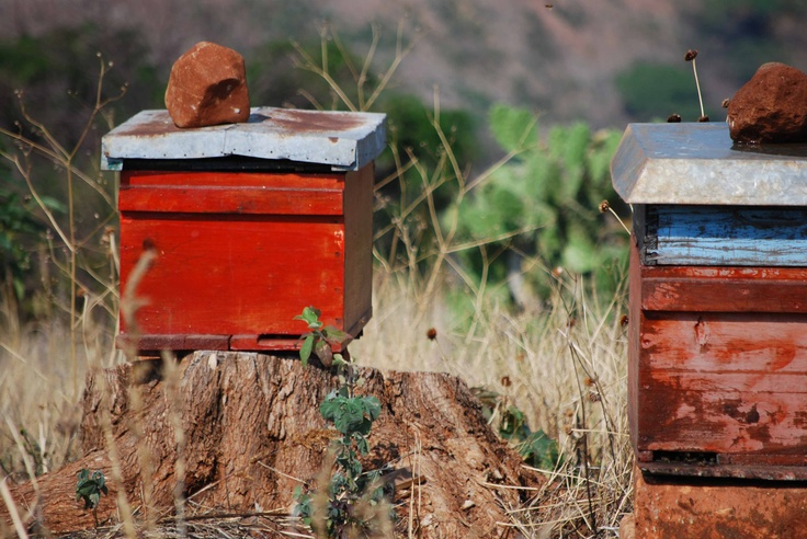 Atotonilco El Alto bee hive 2